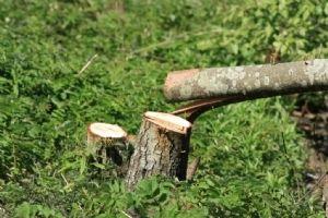 Planten En Bomen : Vandalen vernielen planten en bomen in deurne