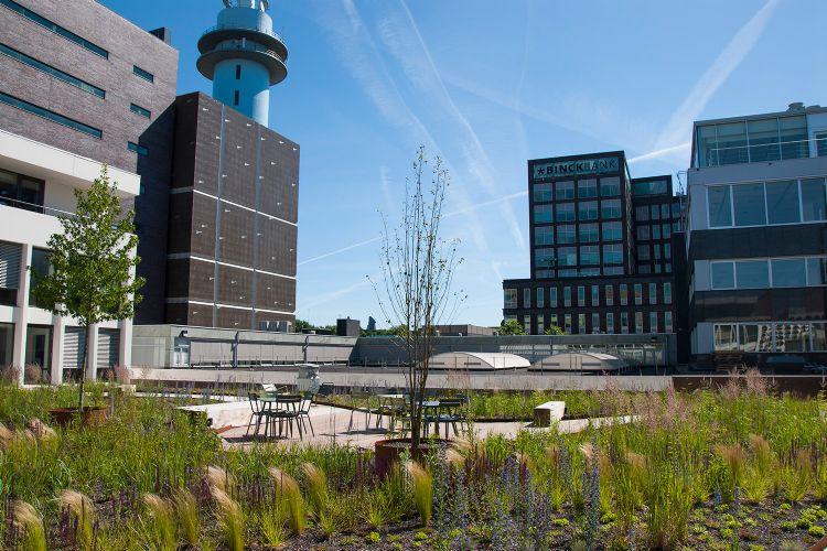 Dakpark Vivaldistraat – Amsterdam. Bron: MetroPolder company