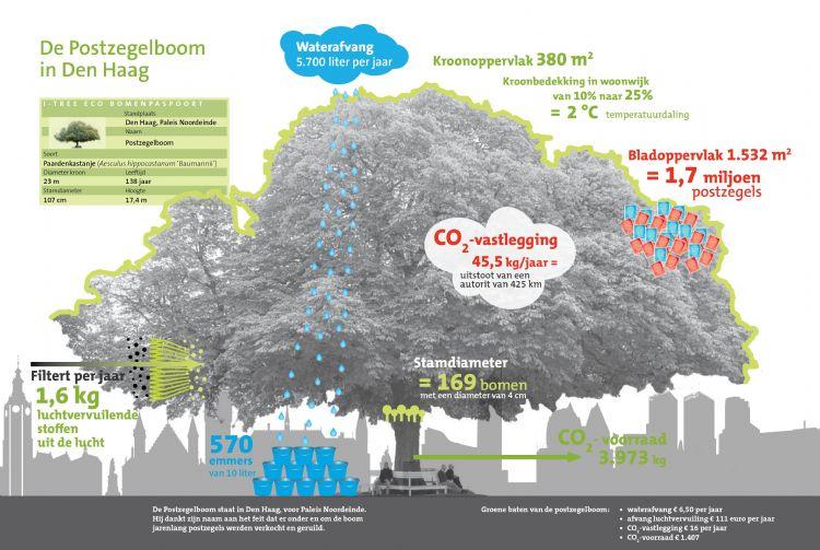 Bron: Platform i-Tree Nederland