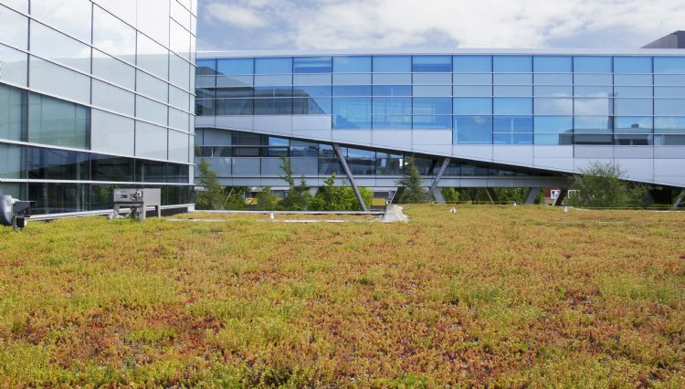 Extensief groendak hogeschool NHL in Leeuwarden, geïnstalleerd met Nophadrain Groendaksystemen