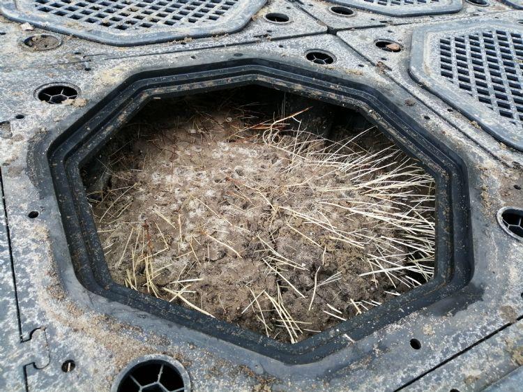 Al binnen een jaar gaan wortels onbeperkt hun gang... (Foto: TreeBuilders)