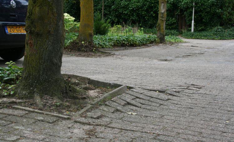 Schade door de verkeerde boom op de verkeerde plek