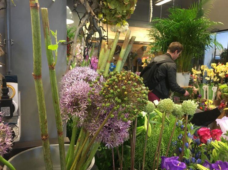 Levende stokken Japanse duizendknoop nog gewoon bij bloemist verkocht en verhandeld via bloemenveilingen.