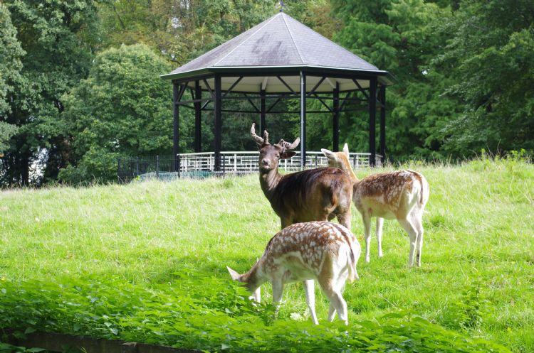 Park De Plantage: historisch groen en oude landschapsstructuren worden in Culemborg gekoesterd.