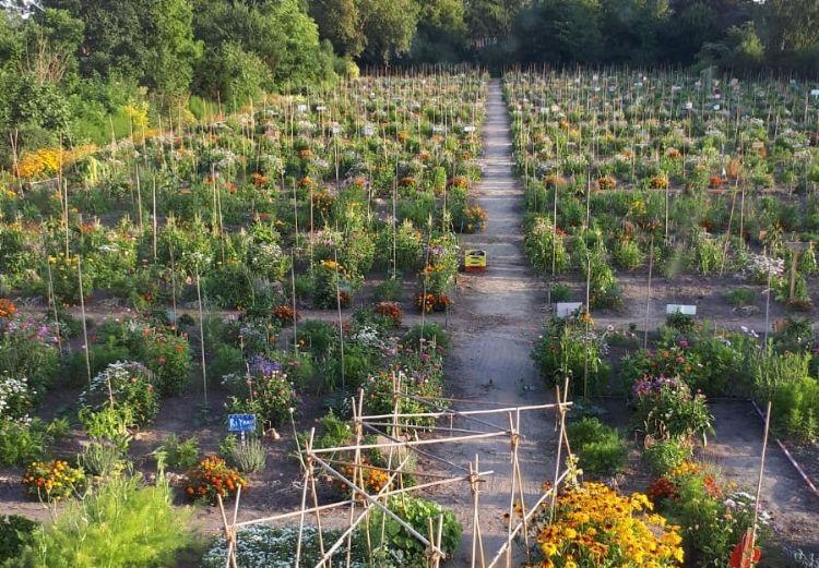 Een van de school(moes)tuinen in Amsterdam (klik om te vergroten)