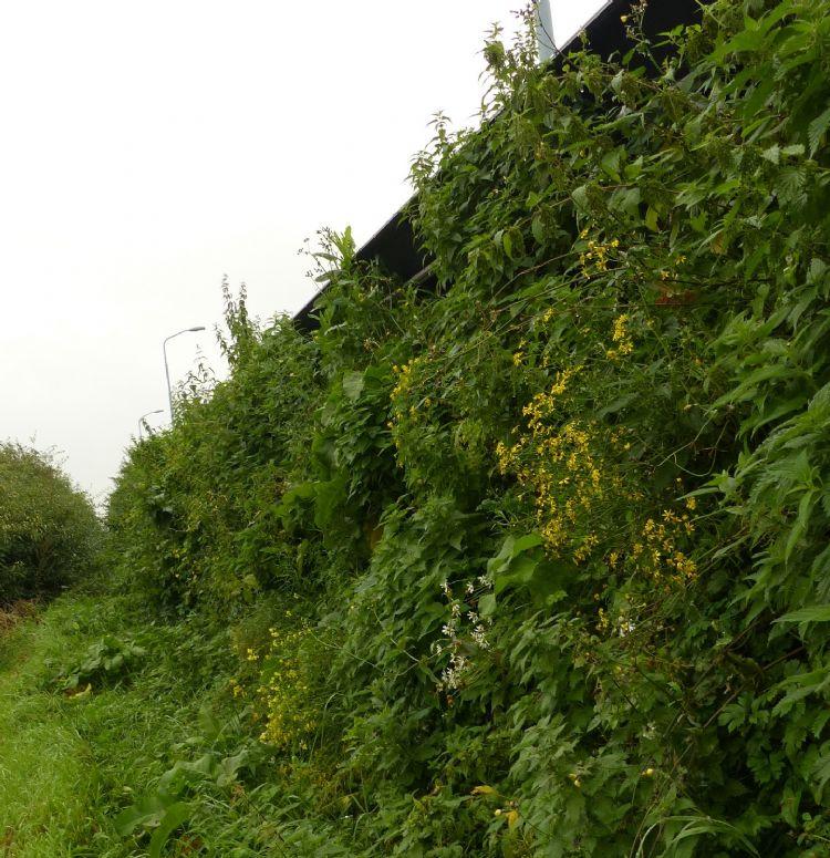 Biodiversiteitverhogende geluidwerende constructie in Hoofddorp
