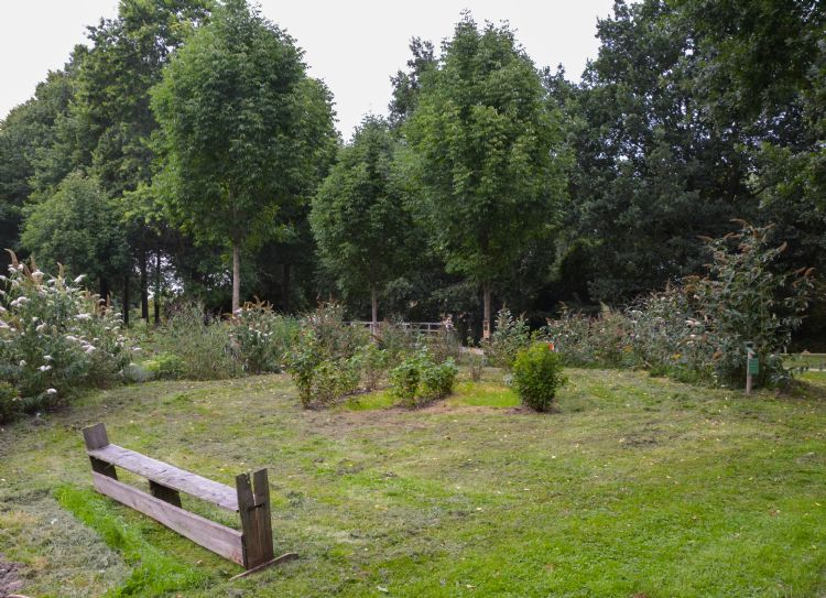 Vlindertuin in Maarssenbroek