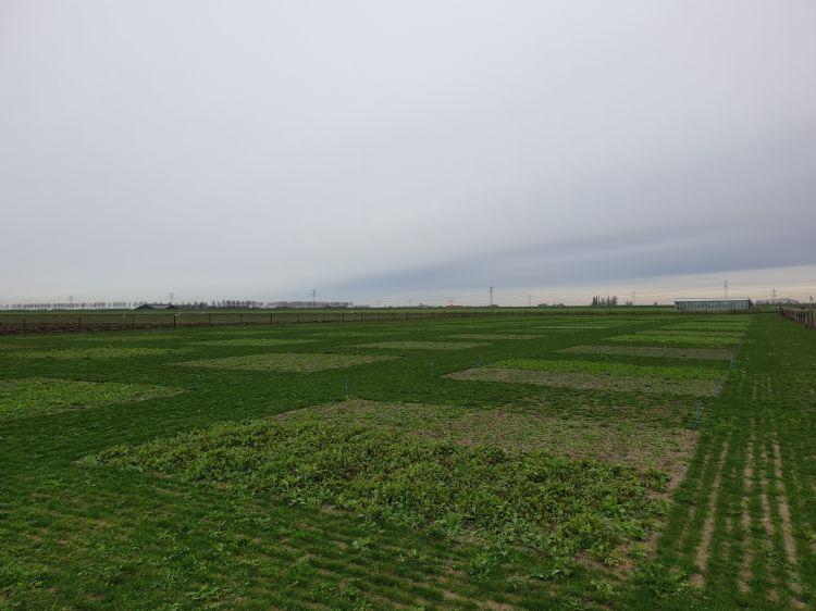 Half januari ligt het demoveld er mooi groen bij.