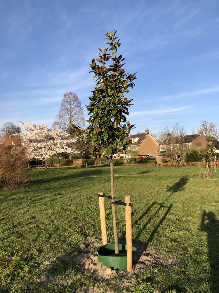 Pas aangeplante boom