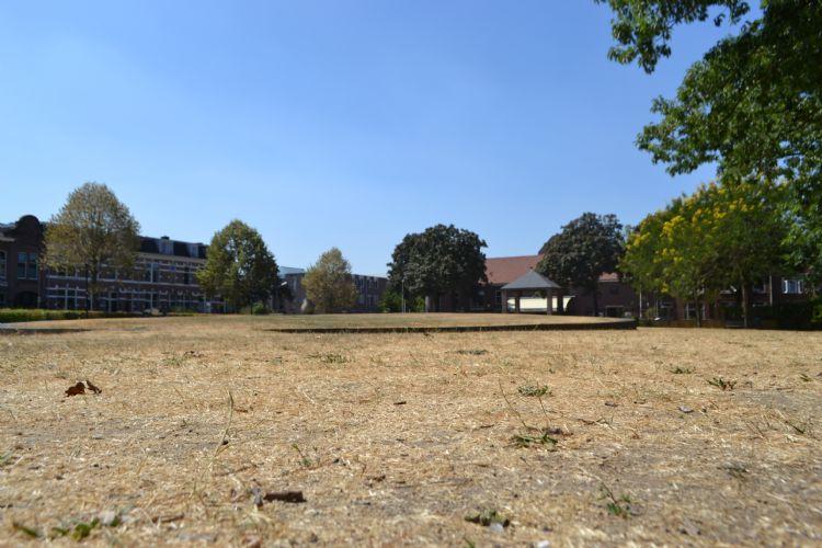 Effecten van de droge zomer in 2018 waren duidelijk zichtbaar. Op de foto het Thiemepark in Nijmegen.