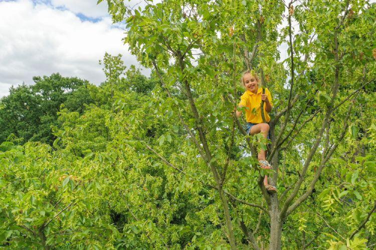 Elin 7 jaar is niet onbekend met klimbomen.