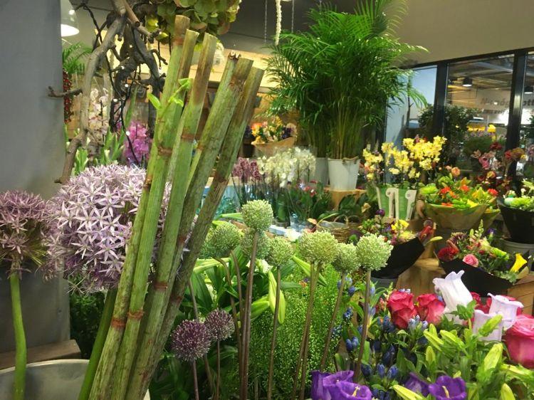 Levende stokken Aziatische duizendknoop nog gewoon te koop bij bloemisterijen en bloemenveilingen.