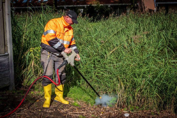 Op deze locatie heeft de gemeente Arnhem vorig jaar onder meer de Japanse duizendknoop met heet water laten bestrijden. Nu laat de gemeente enkel bestrijding middels elektrocutie door Dolmans Landscaping Services toe.
