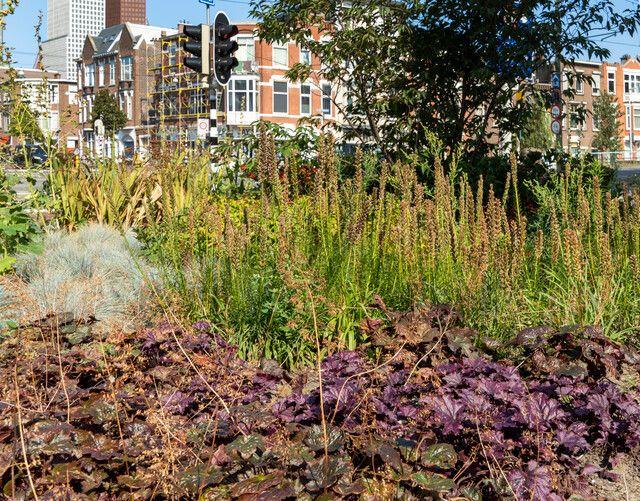Groen in de stad Den Haag