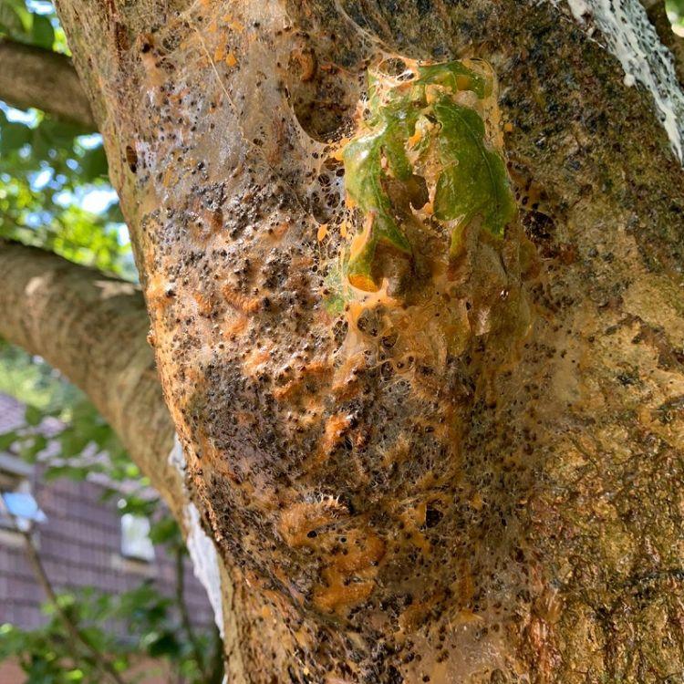Een gefixeerd nest