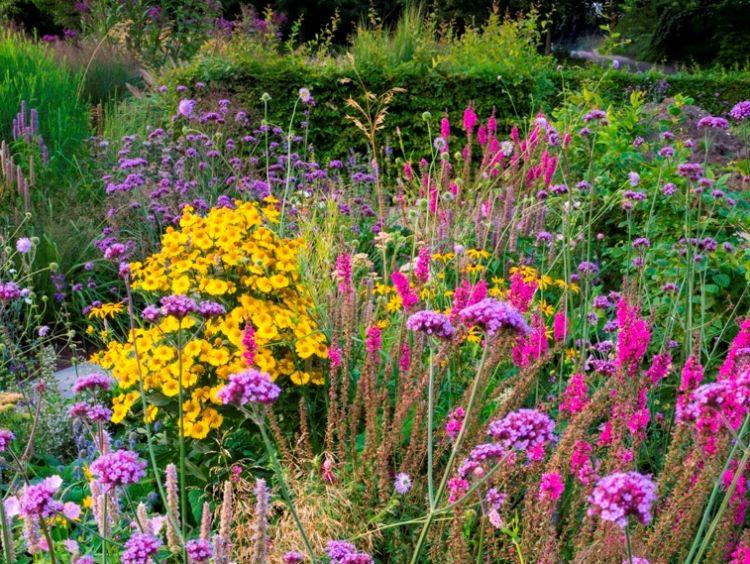 Lageschaar Prairie Garden Gold, bijen- en vlinderlokkend mengsel. Bron: Josef Bieker