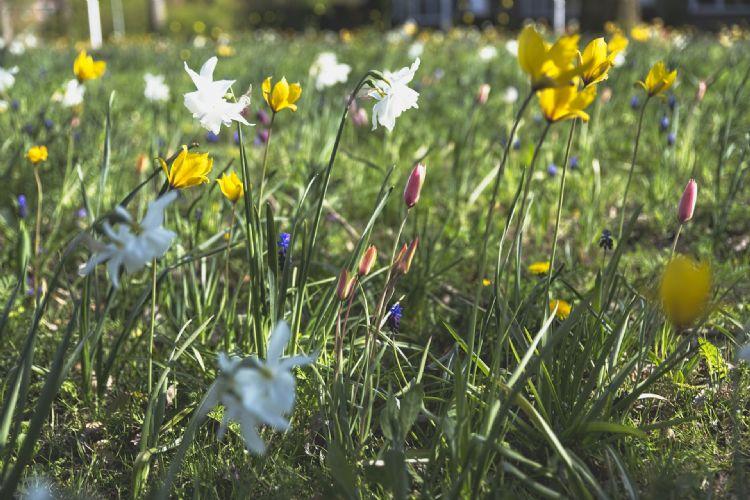 Door een ander maaibeleid moeten meer planten een kans krijgen om te groeien en te bloeien.